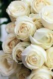 Roses blanches Photos libres de droits