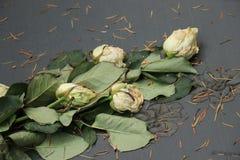 Roses blanches mortes sur une tombe photographie stock libre de droits