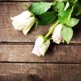 Roses blanches sur l'espace en bois de texte libre de fond Rétro cru Photographie stock libre de droits