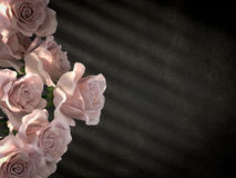 Roses blanches sur le fond décoratif antique de mur en béton Photographie stock libre de droits