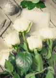 Roses blanches sur le Tableau en bois Photos stock