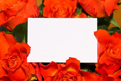 Roses with blank card Stock Photos