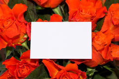 Roses with blank card Royalty Free Stock Photos