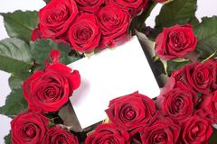 Roses and blank card. A blank card between red roses Royalty Free Stock Photos