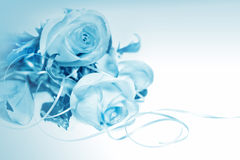 Roses on blue background Royalty Free Stock Photography