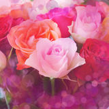 Roses blur background Stock Image