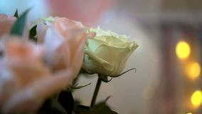 Roses with bokeh of garland Valentine`s day. Celebrating stock footage