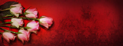 Roses, bokeh, red Stock Images