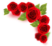 Roses border Royalty Free Stock Images
