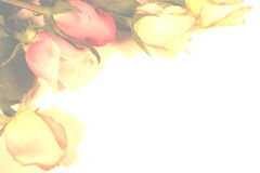Roses Border. A beautiful light muted colors roses border background Stock Images