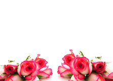Roses border Stock Photography