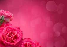 Roses with border design. Beautiful purple roses on a background bokeh Stock Images