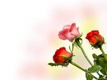 Roses Border.Sepia toned Stock Photo