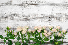 Roses border on wood Stock Images