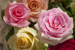 Roses bouquet Stock Photography