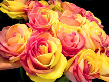 Roses bouquet royalty free stock images