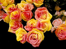 Roses bouquet Stock Images
