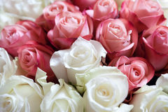 Roses bouquet Royalty Free Stock Photos