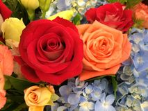 Roses bouquet Stock Photos