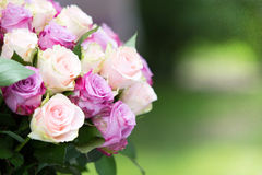 Roses bouquet. With free space for text Stock Images