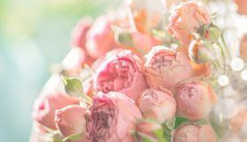 Roses. Bouquet of pink rose flowers in sun light. Holiday stock photography