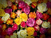 Roses, Bouquet Of Roses, Bouquet Royalty Free Stock Photography