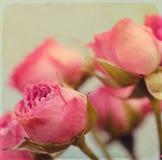 Roses bouquet. Vintage retro style. Royalty Free Stock Photos
