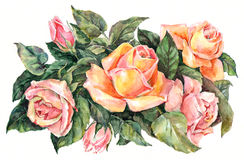 Roses bouquet, watercolor Stock Photography