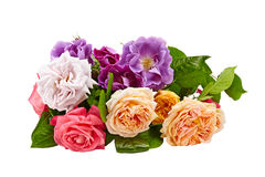 Roses bouquet on a white background isolated Royalty Free Stock Images