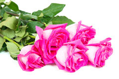 Roses bouquet  on white Royalty Free Stock Photography