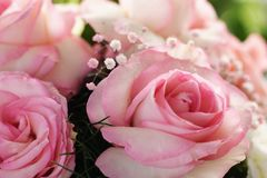 White Roses with pink borders Bouquet. Roses bouquet with white roses with pink borders, pink and white baby`s breath gypsophila and tree ferns stock images