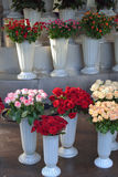 Roses in bouquets in plastic vases Stock Image