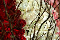 Roses and branches Stock Photos