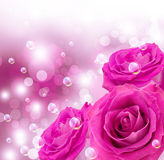 Roses and bubbles Royalty Free Stock Photos