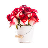 Roses in the bucket Stock Photography