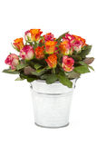 Roses in a bucket Royalty Free Stock Photography
