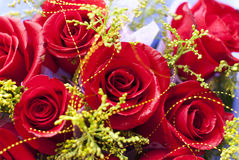 Roses. A bunch of beautiful roses Stock Photography