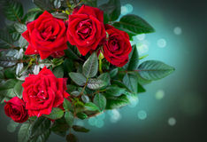 Roses Bunch design Royalty Free Stock Images