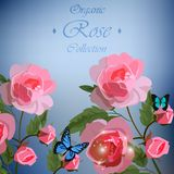 Roses and butterflies Royalty Free Stock Image