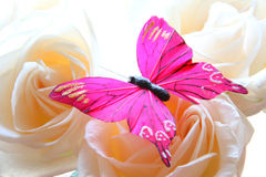 Roses and butterfly Stock Photo