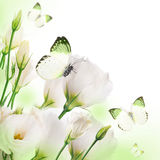 Roses and butterfly Royalty Free Stock Image
