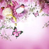 Roses and butterfly Royalty Free Stock Images