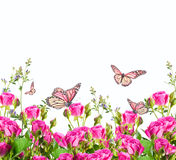 Roses and butterfly, floral background Stock Photography