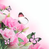 Roses and butterfly, floral background Royalty Free Stock Photo