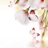 Roses and butterfly, floral background Stock Photo