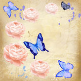 Roses with butterfly on grunge background Royalty Free Stock Image