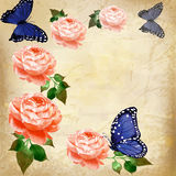 Roses with butterfly on grunge background 2 Stock Photos