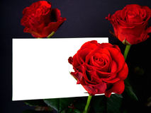 Roses with card 1. Roses with gift card, black background Royalty Free Stock Images
