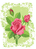 Roses card Stock Images