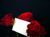 Roses with card. Roses with gift card, black background Royalty Free Stock Photography
